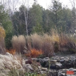 Ornamental Grasses Bed