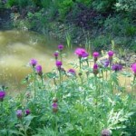 The pond is in a shady area with turtles, frogs and other wildlife